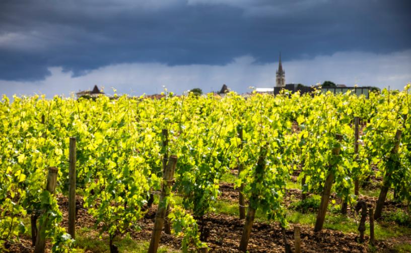Buscando el mas caro vino del mundo de Burdeos: Château Lafleur 4