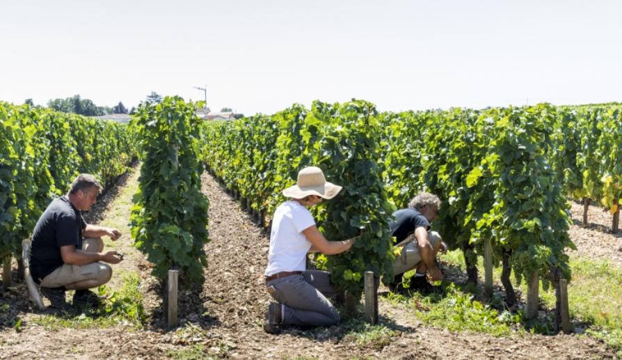 Buscando el mas caro vino del mundo de Burdeos: Château Lafleur 2