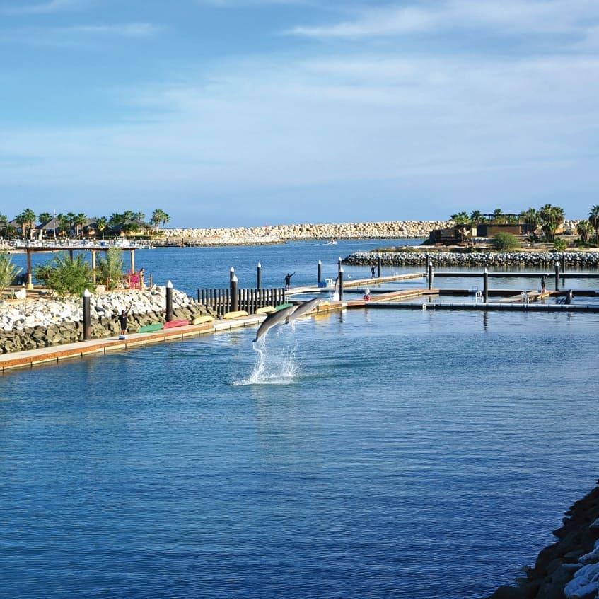 un parque de delfines en punta cana